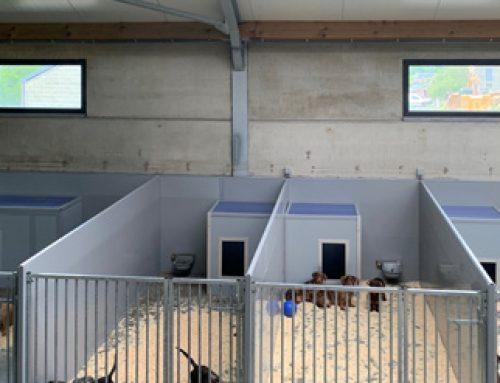 Bouw hondenresort in België